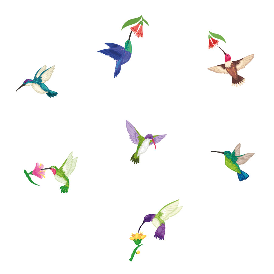 Hummingbird and flowers window stickers on a white background