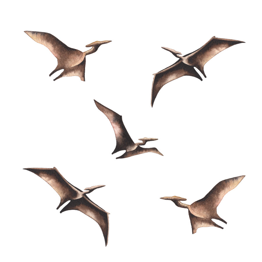Pterodactyl wall stickers on a white background