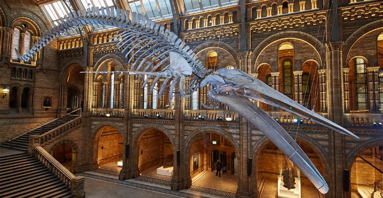 national history museum perfect for Easter visits with kids